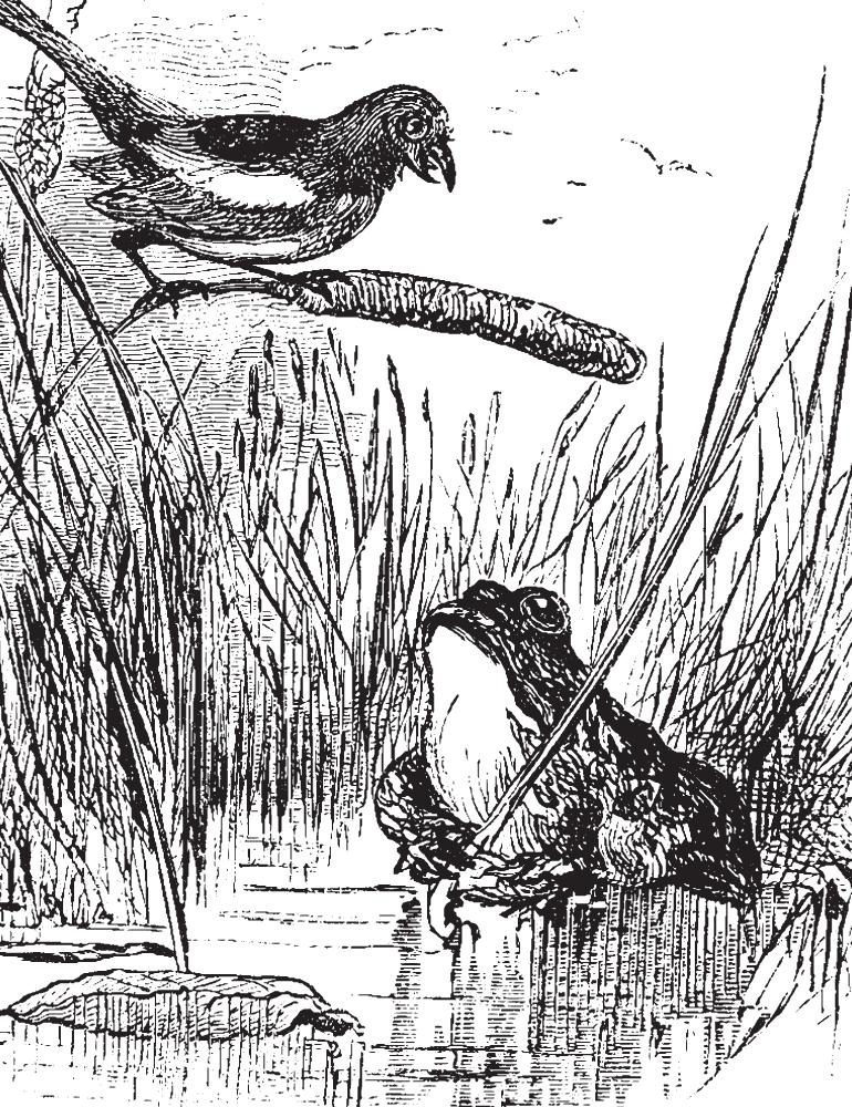 Babi di Canale (rospi)