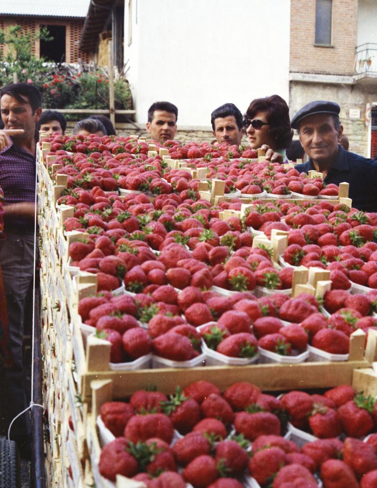 Mercato delle fragole a Sommariva Perno